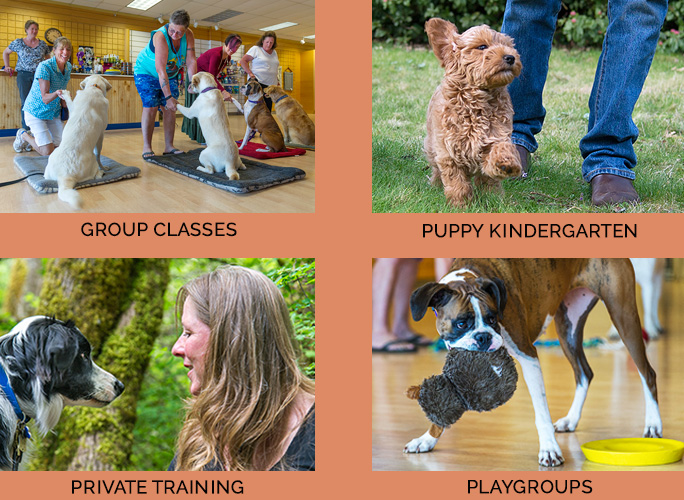 Good Dog! School has Group classes private training by Wendy Pool